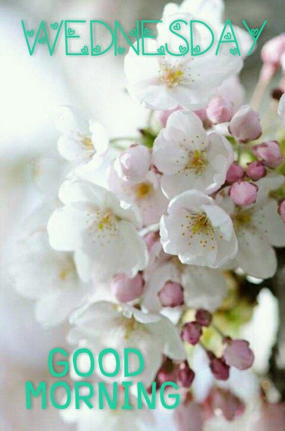 Hello Wednesday Images : hello, wednesday, images, Hello, Wednesday, Beautiful, Flowers, ❤♡☆), Frases, Mañana,, Hasta, Buenos