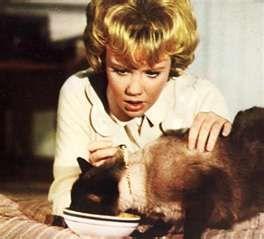 That Darn Cat~ Hayley Mills~ 1965