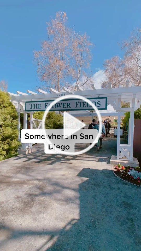 Katrina Katrinathi On Tiktok Fyp Flowers Sandiego Carlsbad Tiktoktravel Flowerfields San Diego Carlsbad San
