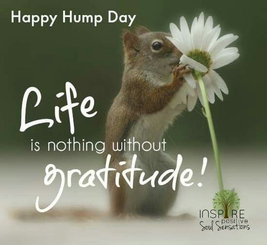Hump day ecard sun animated images gifs pictures animations free hump day ecard m4hsunfo