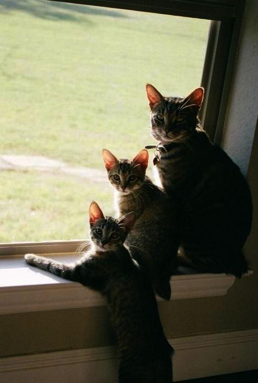 23++ Kitties dance info