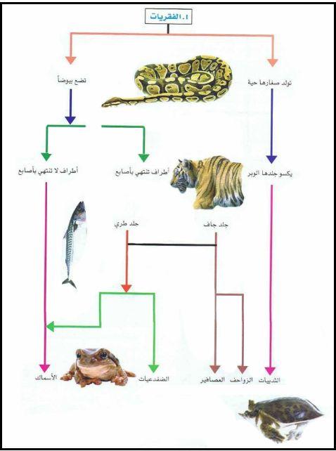 بحث عن تصنيف الحيوانات Animals