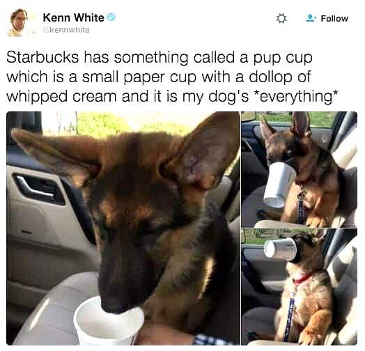 Bahahahaha Dog Memes So Funny Dog Meme Hearts Dog Memes Clean Funny Dog Memes Dog Quotes Funny