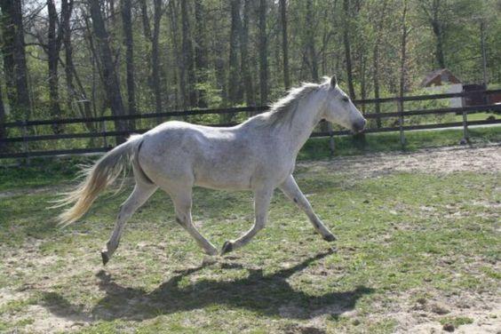 My dream horse