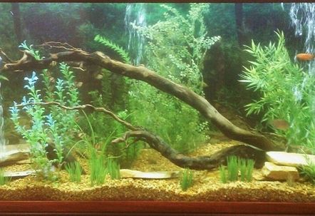my 150 gallon fish tank