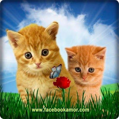 Dos lindos gatos con mariposas