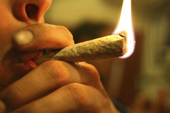 #Cannabis macht die Knochen dünn - scinexx | Das Wissensmagazin: scinexx | Das Wissensmagazin Cannabis macht die Knochen dünn scinexx | Das…