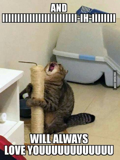 HOW ABOUT A WHOLE HUGE BUNCH 'O' CAT MEMES? - CutesyPooh