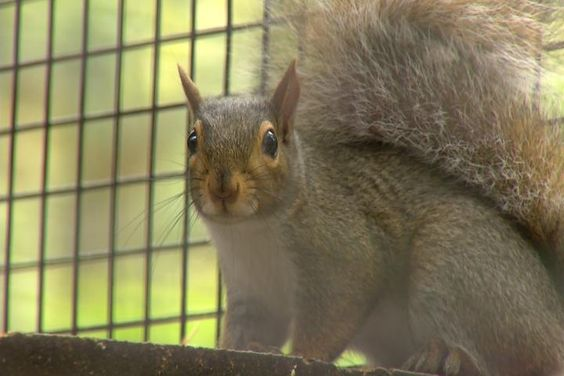 Northern Michigan Animal Rehabilitation Center Collecting Acorns - Northern Michigan's News Leader