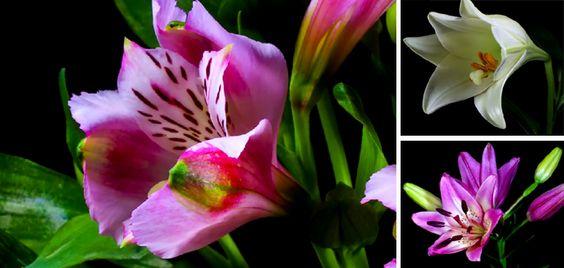 A natureza faz um espetáculo perfeito, que imagem. Dá uma olhada! #OlhardeMahel