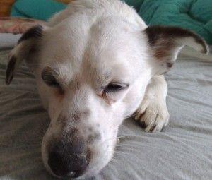 Charity for Dogs - getreidefreies Hundefutter mit Charakter, für gesunde Hunde, allergiefreie Hunde, und alle die mit dem Futterkauf auch etwas für Hunde in Not tun wollen. Unser Testpartner verschenkt nämlich 50% der gekauften Futtermenge zusätzlich an die Tiertafel(l): http://frankies-world.de/?p=3231