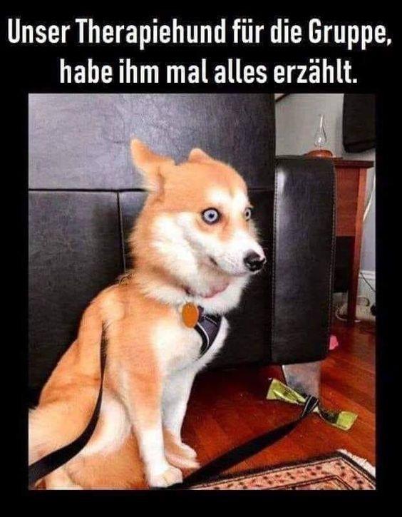 Hunde Wurden Netflix Gucken Issn Rude Hunde News Dogstyle