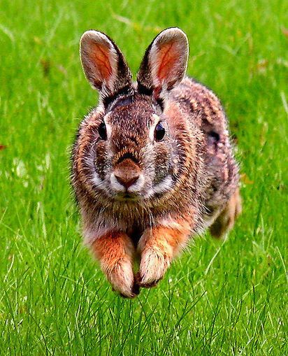 Earth our Home Too : Rabbits