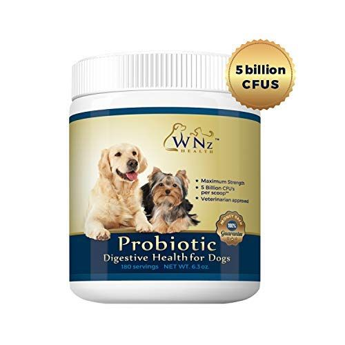 Probiotics For Dogs Best Relief From Diarrhea Constipation