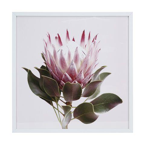 Protea Flower Framed Print In 2020 Flower Frame Flower Wall Art Framed Prints