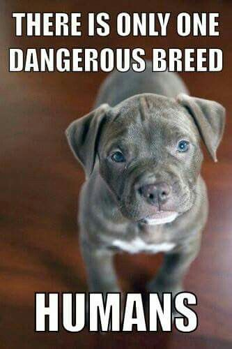 There is only one dangerous breed...humans Agree? i do.... and it is rare for humans to feel what animals feel! im one of those people. are you?: