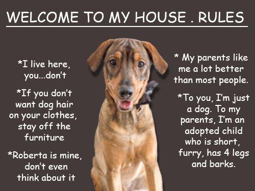 #dog #rules