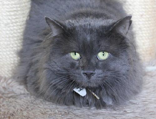 You can fill out an adoption application online on our official website.Timmy est un magnifique chat, très doux et très calme. Il ne se chamaille jamais avec les autres chats et aime bien passer de longs moments dans vos bras. Bien sûr, il...