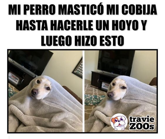 Pin De Ana De La Vega En Memes Divertidos En 2020 Memes Divertidos Memes Comicos Memes Chistosisimos