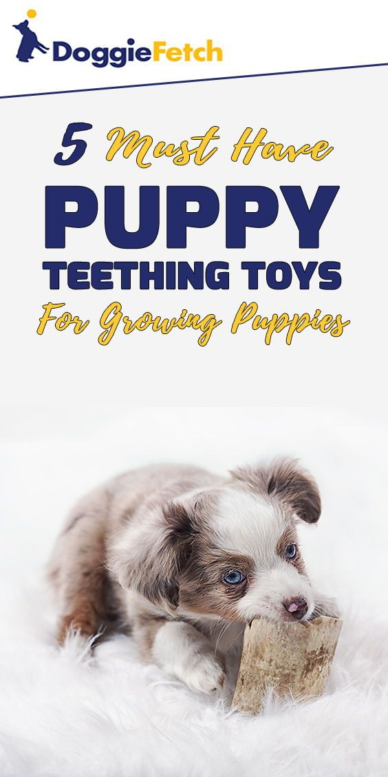Puppy Teething Toys 5 Must Have Toys For Growing Puppies Puppy Teething Teething Toys Puppies