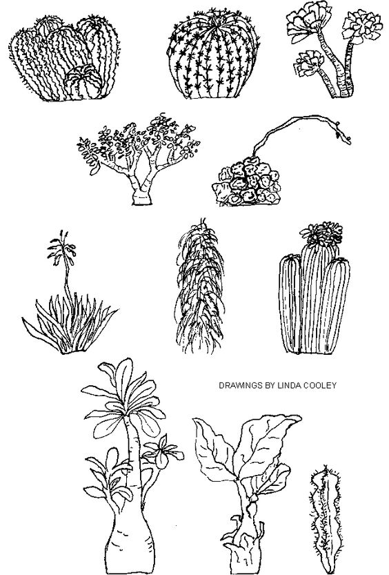 Line Drawing Of Desert Animals : Succulent line drawing euphorbia google search ideas