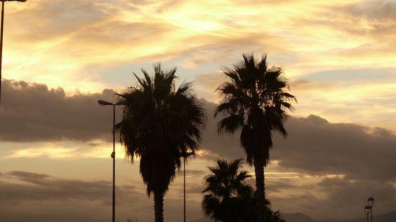 Palmen vor Abendhimmel (Ligurien)