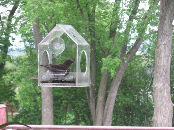a snack from the window feeder....tough to not scare them off, though!!