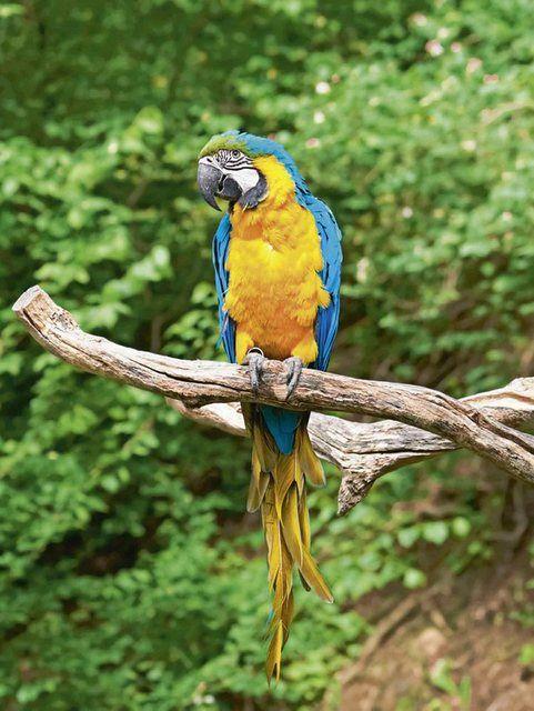 Glasbild Nataliya Hora Ara Auf Zweig Papagei In 2020