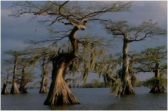 ThanksManchac Swamps, Louisiana awesome pin