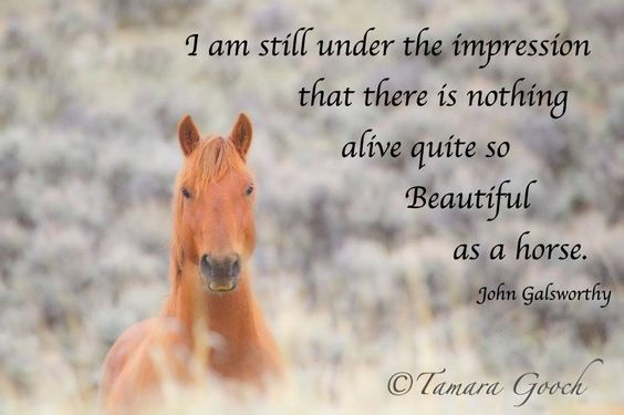 """""""I am still under the impression that there is nothing ..."""