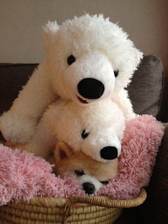 llbwwb:    For the Dog Lovers :) via:cutestpaw. Todays Cuteness :)