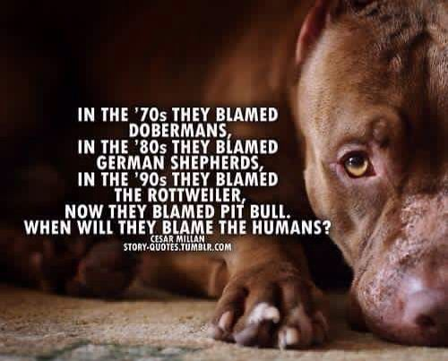 Blame the Humans