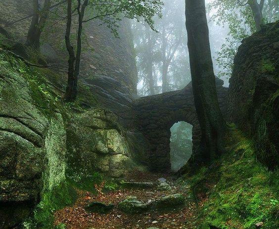 Portal na floresta.