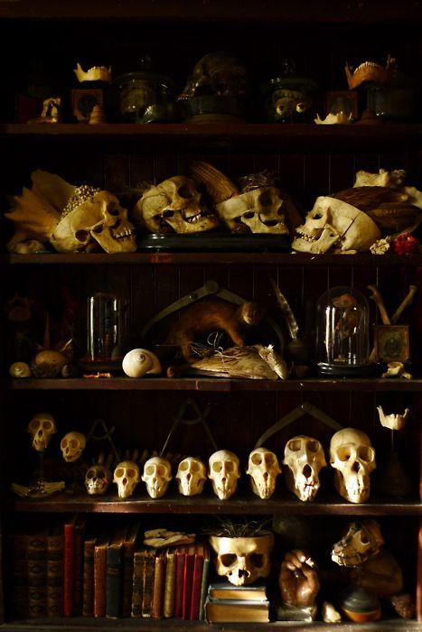 natural history....library-ish....masculine...Hogwarts ish!