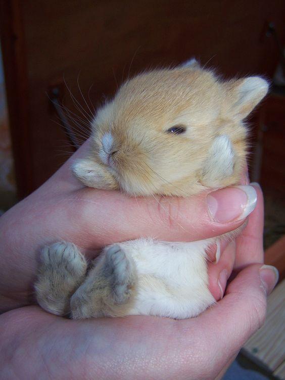 B b lapin nain nouillelfique mon clap - Photo de lapin mignon ...