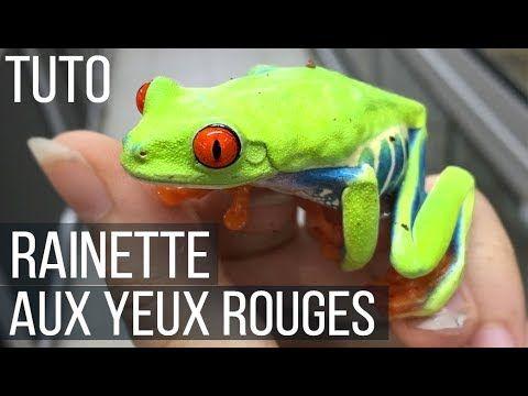 Tuto Rainette Aux Yeux Rouges Maintenance Installation