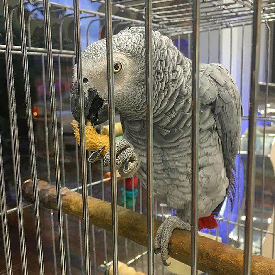 #كاسكو #طوطي #parrot photo taken by @behzadhd by ali_ebrahimi1364 http://www.australiaunwrapped.com/