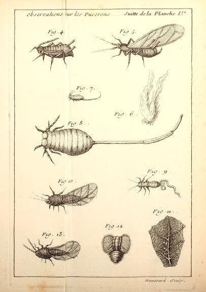 1 - Traité d'insectologie ... - Biodiversity Heritage Library