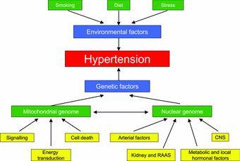 pathophysiology of hypertension - Google Search