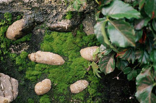 Rocks, moss.  Surface, texture, durability.