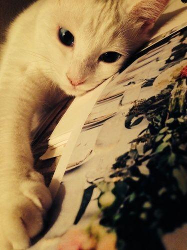 cat おひさしぶりです。。。 : ねこごち