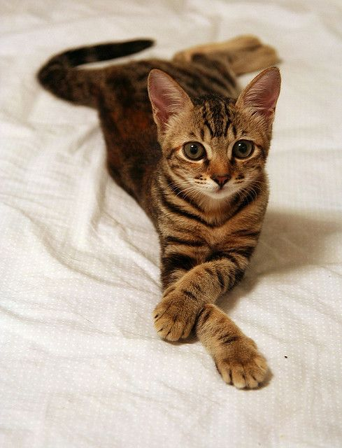 Refined kitty
