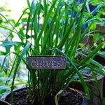 5 best herbs to grow in your kitchen window - parsley, oregano, chives, basil, thyme