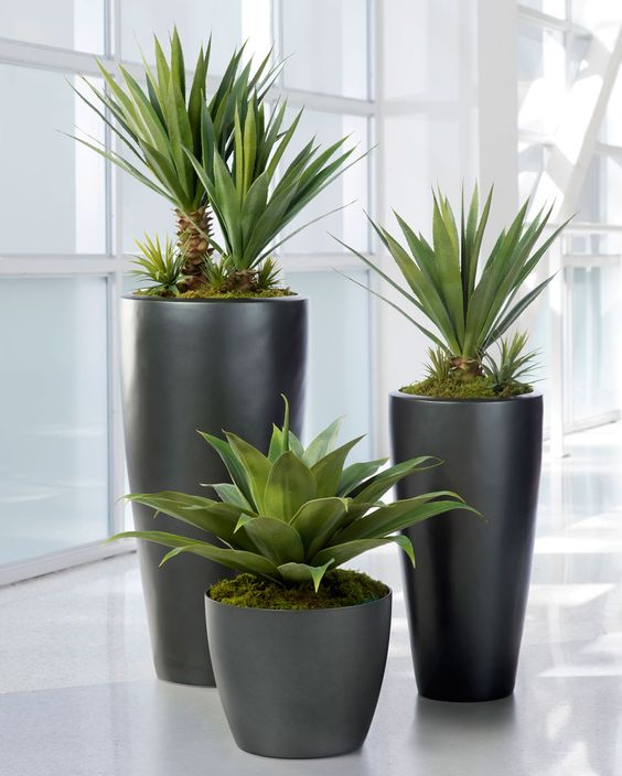 Broad leaf agave artificial succulent plant agaves artificial plants and entry ways - Green leafy indoor plants ...