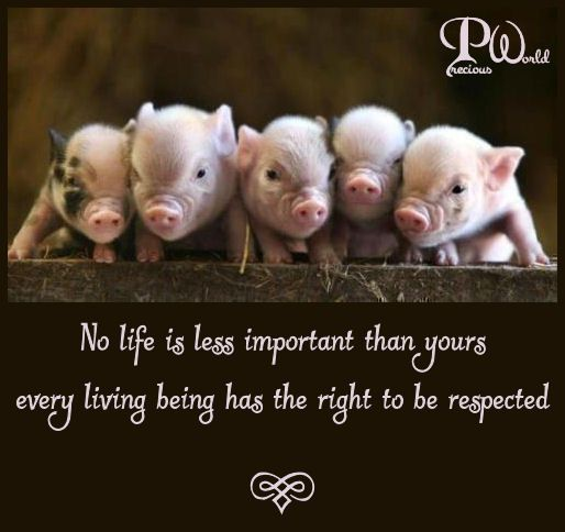 Image result for animal rights quotes
