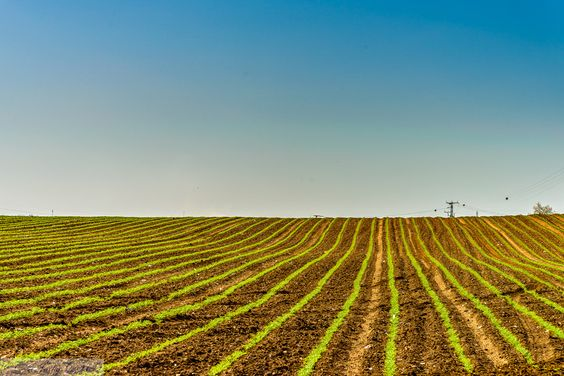sown field by  ©Jacky COSTI Photography on 500px