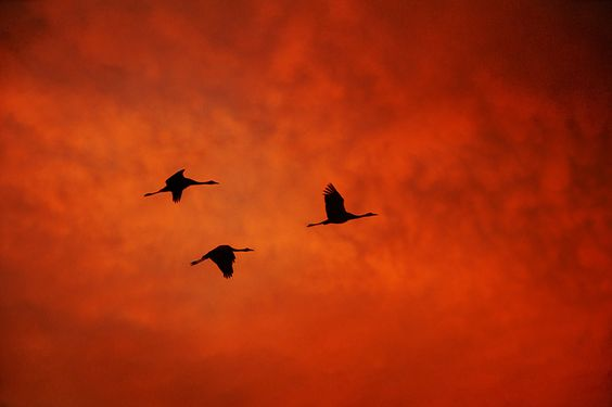 Last Flight by Tomer Merav, via 500px