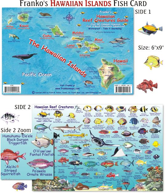 Laminated hawaiian islands reef creatures guide identifies for Hawaii reef fish