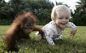 orangutans - Google Search