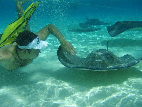Swim with wild stingrays